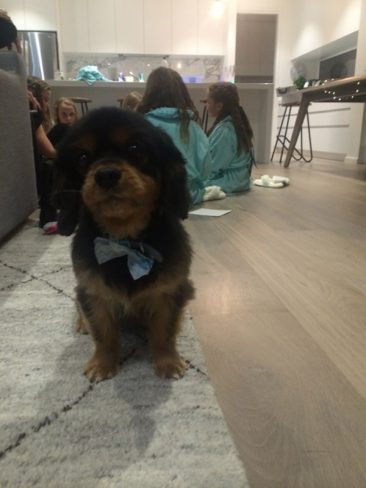 puppy getting involved in pamper events kids party in mornington