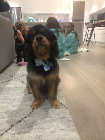 puppy watching kids pamper party in mornington